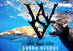 CAN SHARKS SHOW APPRECIATION?  SHARK RESCUE