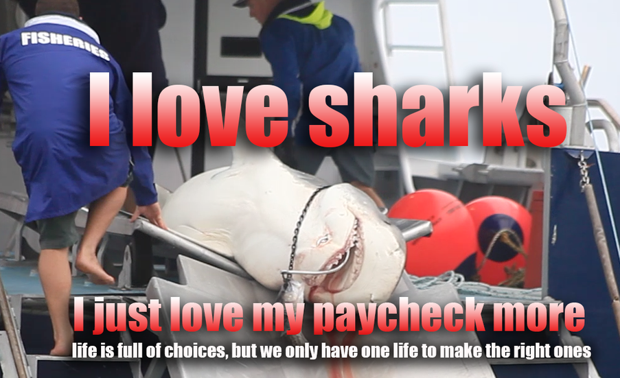 I love sharks, I just love my job more
