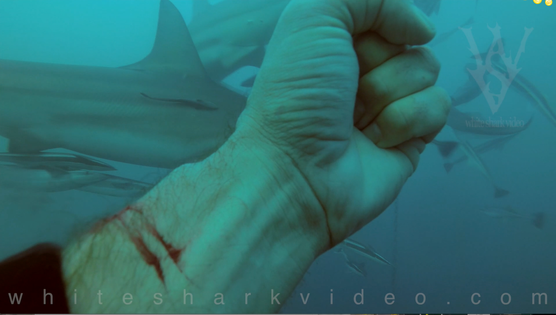 Shark filmmaker Skyler Thomas reminds us that just because sharks can smell our blood doesn't mean it is of interest to them.