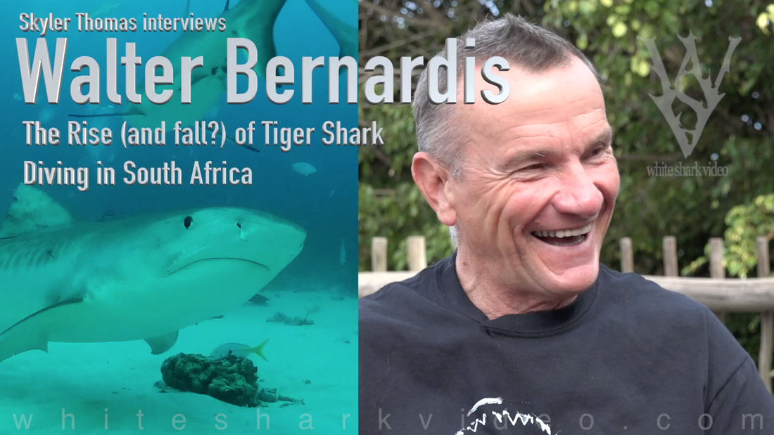 Skyler Thomas interviews Walter Bernardis regarding the rise and fall of the tiger shark diving industry in South Africa.  What were the early days like? What was the process of learning to dive with tiger sharks?  Why is the industry already coming to an end and who is responsible? #skylerthomas #whitesharkvideo