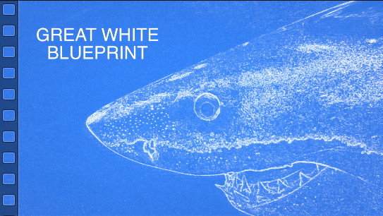Filmmaker, Skyler Thomas, gives us a new view of the white shark's anatomy by adding a blueprint effect to White Shark Video's footage of white sharks.  The result is mesmerizing and educational. #whiteshark #skylerthomas #whitesharkvideo #blueprint
